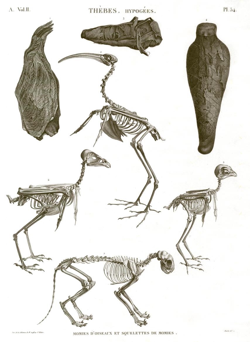 animals and birds mummies