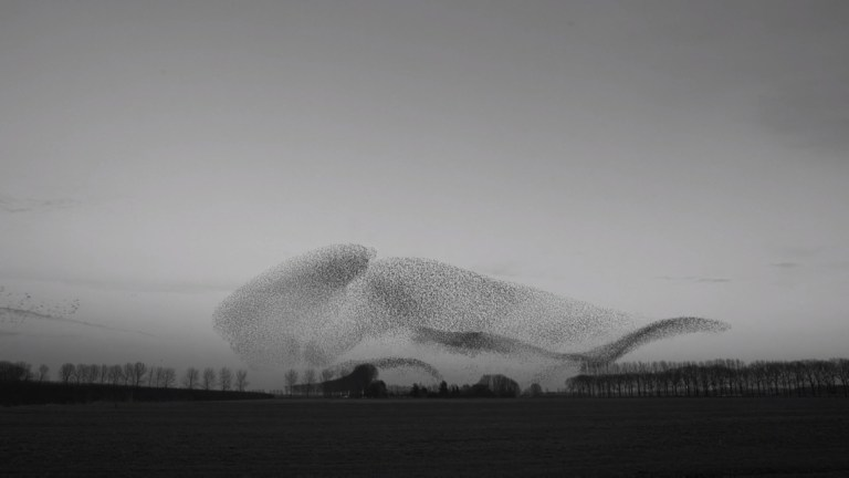 The Art of Flying, Murmurations