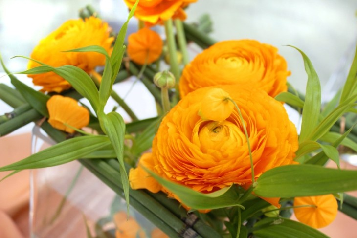 orange modern Göttinger Hochzeitsträume 2016