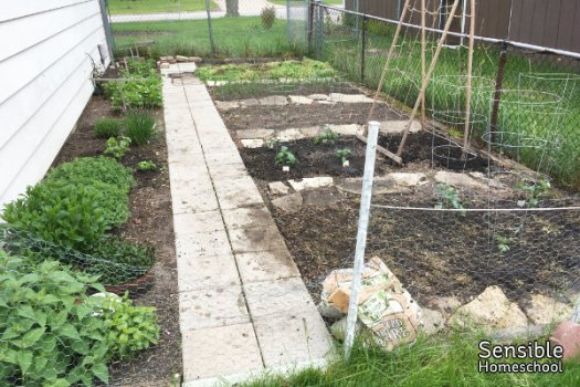 vegetable and herb garden in spring