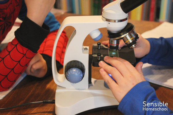 Homeschool boys using microscope for science