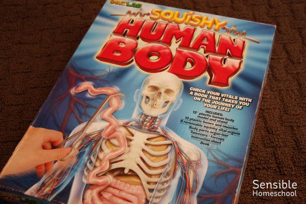 Homeschool science SmartLab Squishy Human Body activity model