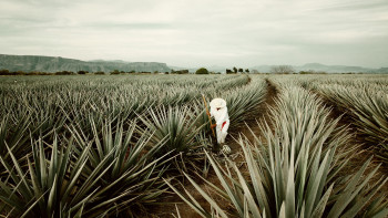 four-seasons-punta-mita-tequila-tour-2400x1350-2