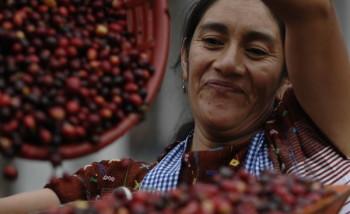 Presidio-caffè-Huehuetenango-3