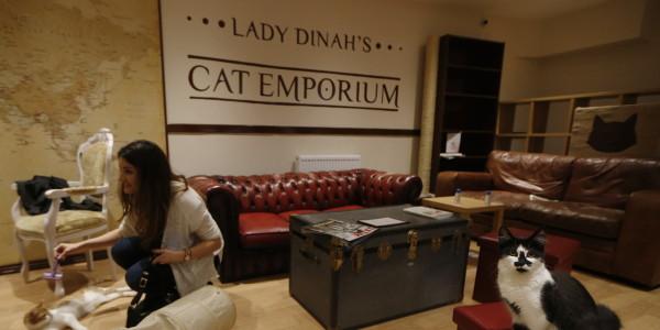 tea room Londra Britain Cat Cafe