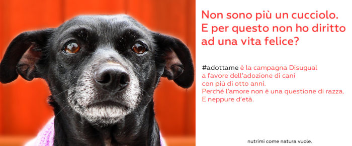 #Adotta_me, terremoto banner_adottame