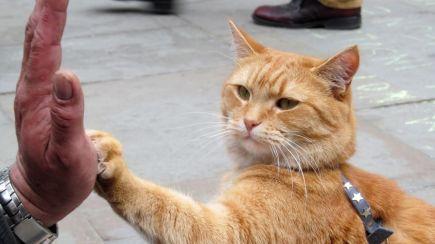 a-spasso-con-bob-rilasciato-trailer-del-film-sul-felino-vagabondo-v3-273616-1280x720