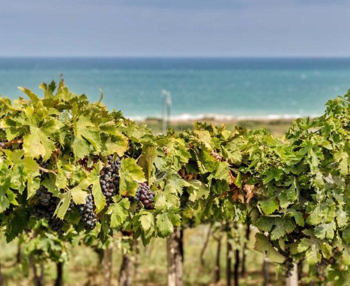 Abruzzo- Words of Wine 2018