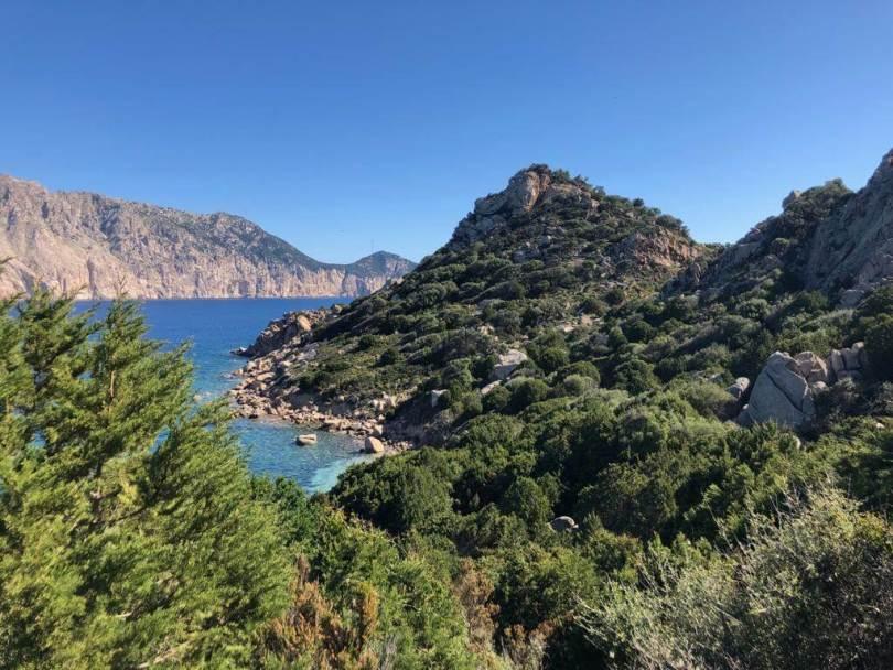 Wave of Nature_Molara_Sardegna_delfini