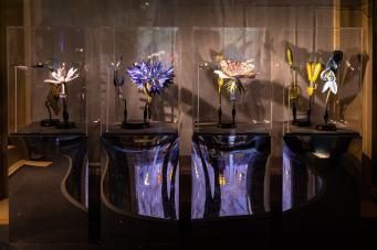 mostra-botanica-leonardo-MUSE-7