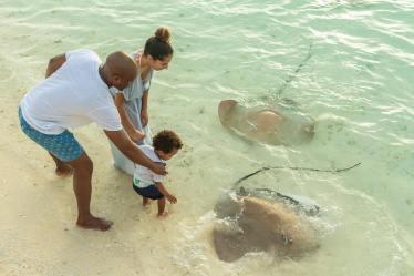Sun Aqua Vilu Reef stingrey-feeding-2