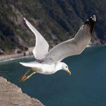Corniglia_Cinque_Terre