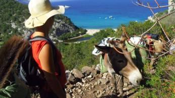 Portale Sardegna_Selvaggio blu asini