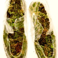 moss insoles