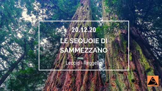 Le sequoie di Sammezzano