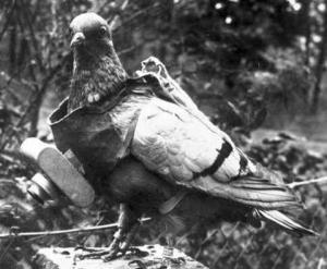 Animali da guerra di Fosco Quilici, il tentativo fallito di un piccione con macchina fotografica