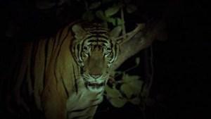 Tropical Malady (2004) di Apichatpong Weerasethakul