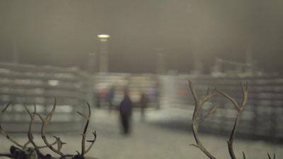 SUNDANCE 2013, i corti. Reindeer di Eva Weber