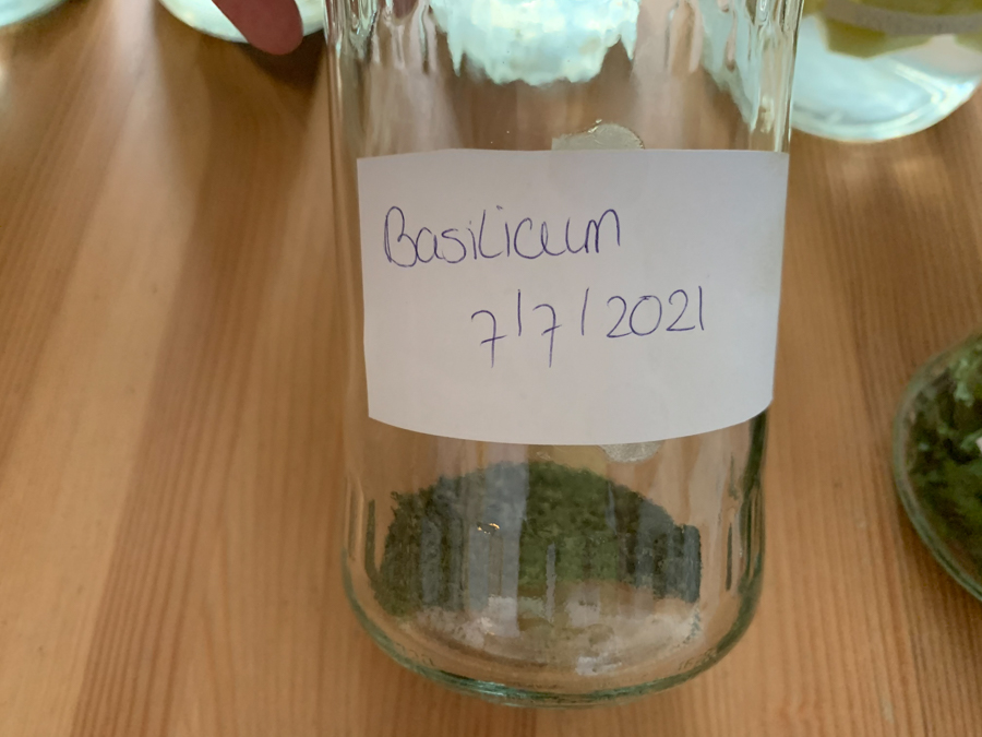 Moestuin update augustus 2021 - gedroogde basilicum