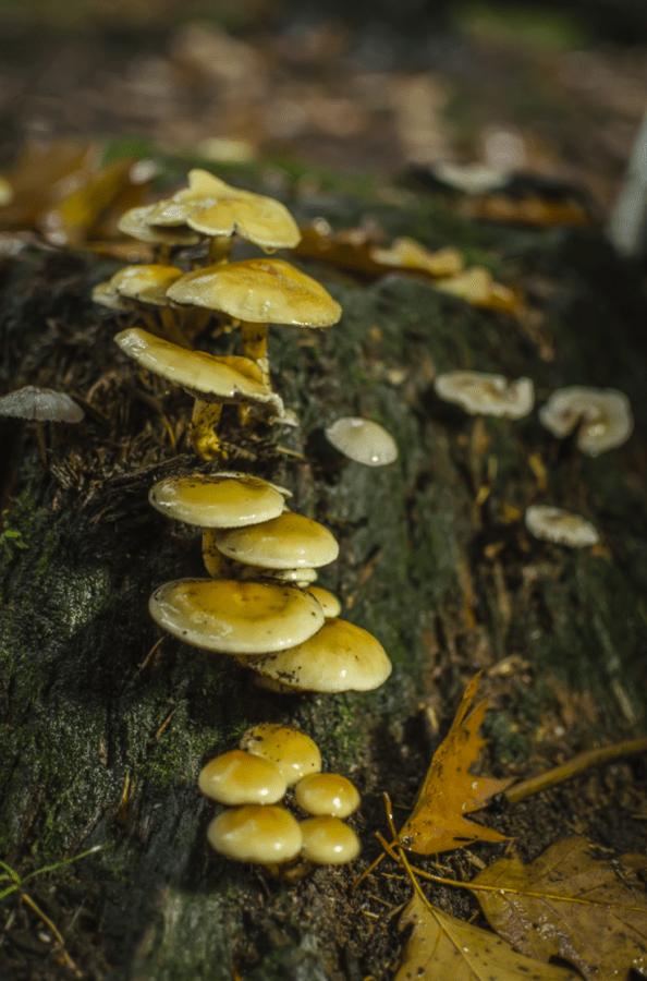 Mastbos paddenstoelen