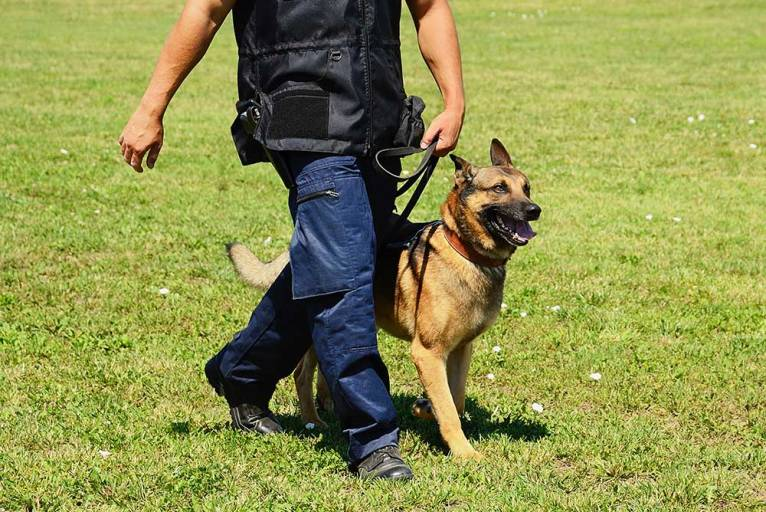 Dog Handling / Sniffer Dog Contract Security Services