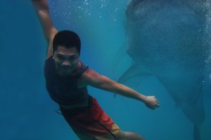 A Refreshing Morning with the Whale Sharks of Tan-awan,Oslob