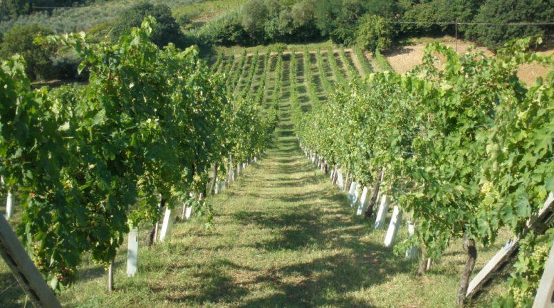 Vino del Lazio