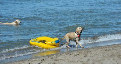 Baubeach 20 giugno 1998: una data storica per tutti i cani