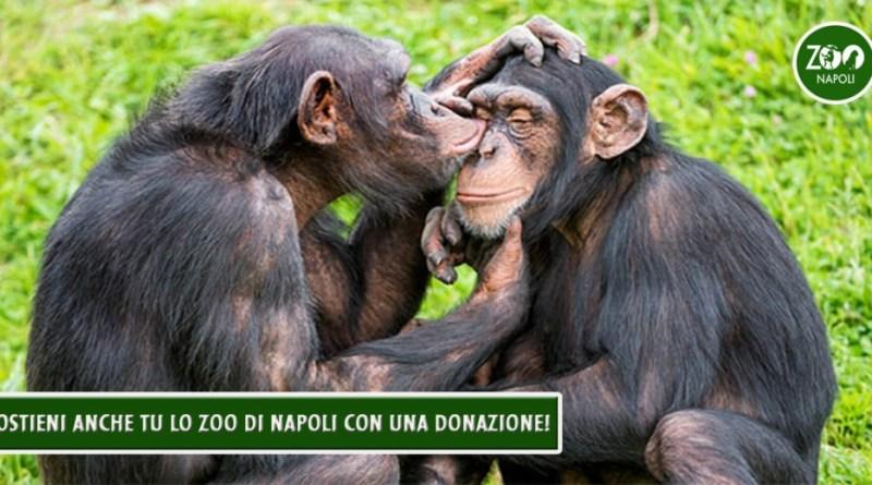 Lo zoo di Napoli, invita le scuole di primo e secondo grado, a partecipare al nuovo Progetto A.R.C.A. (Atti Reali di Cortese Affetto).