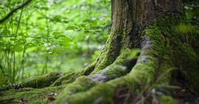 """Italia Nostra Lazio e Toscana: Pollice verso per il nuovo Testo Unico Forestale, normativa da riscrivere subito.Una normativa """"brucia-foreste"""" che rappresenta un colpo mortale alla tutela degli ecosistemi forestali presenti in Italia."""