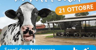 Porte aperte in fattoria, torna l'Open Day organizzato dalla Filiera Latte del Lazio.Scoprire il mondo del latte nelle aziende agricole di Roma, Frosinone e Latina.