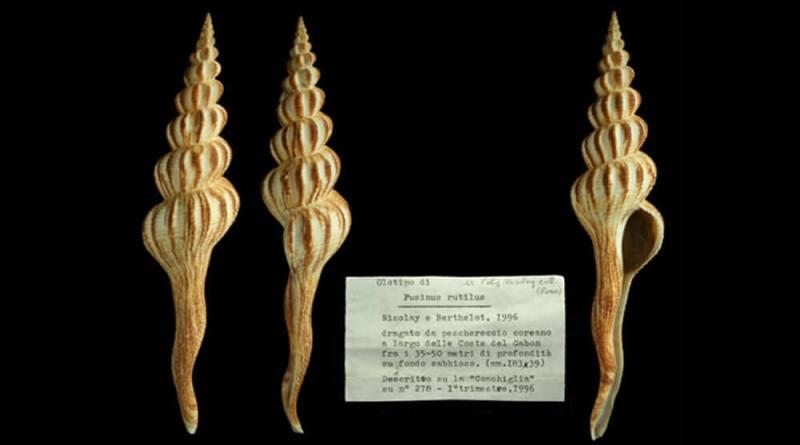 """Il Museo Civico di Zoologia """"apre"""" i suoi scrigni di Biodiversità e presenta Le conchiglie del Marchese di Monterosato. Mercoledì 23 gennaio alle ore 18."""