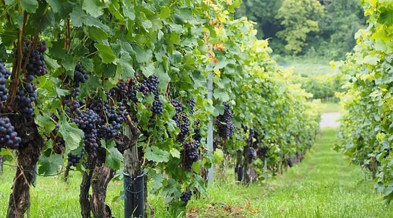 Avete in programma una gita in Toscana, all'insegna delle degustazioni di prodotti tipici? Con Maurizio Bertelli, idee per un itinerario enogastronomico