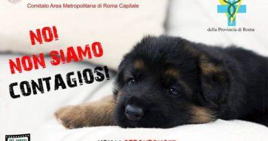 Noi non siamo contagiosi, campagna dalla Croce Rossa Italiana contro l'abbandono di cani e gatti che non infettano l'uomo con Covid-19.