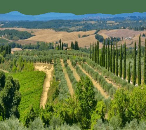 Tornano gli itinerari enogastronomici proposti da Candy Valentino: parliamo della zona di produzione del vino Chianti. Marchio, zone e sottozone...