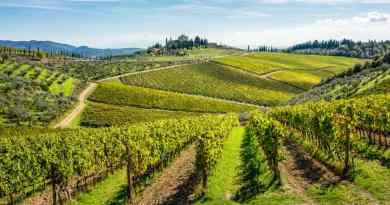 Alla scoperta del centro Italia con escursioni ed enogastronomia! Toscana e Lazio di sapori da riscoprire.