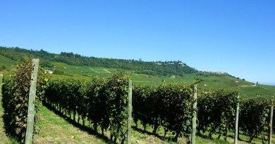 Il vino Barolo è uno dei rossi più rinomati al mondo: scopriamo i metodi di produzione e le origini di questo nettare.