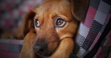 Arriva il Pet Camper Tour. Lascia una dedica per il tuo animale del cuore ai nostri videomaker, partecipa e ricevi gadget. Ingresso gratuito