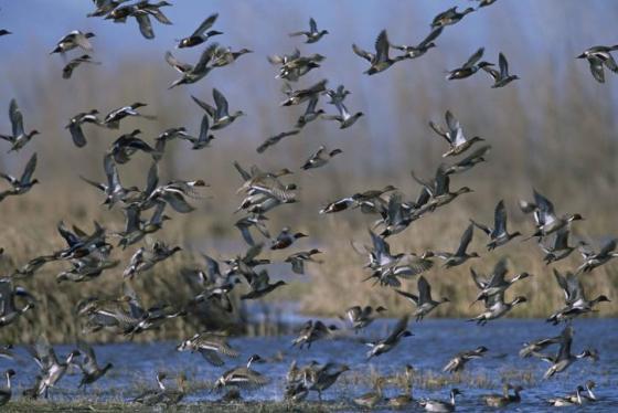 Las aves y la biodiversidad en general, necesitan ríos vivos y naturalizados