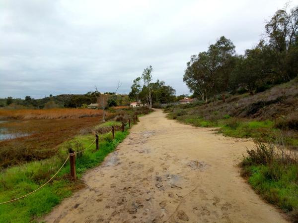 A Path through the Batiquitos Lagoon