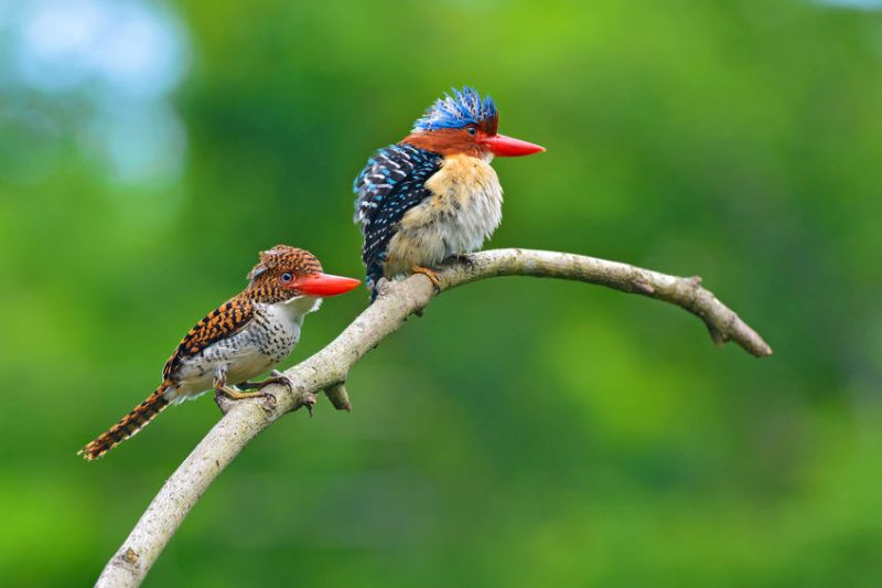 Cheap Web Hosting for the Birds