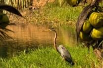 MangalaResortSpa_Burung_5
