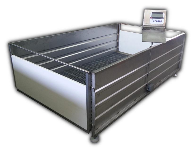Balança Eletrónica Suinos PVC/Inox