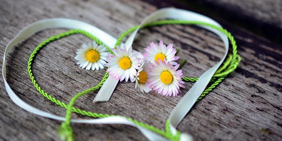 flores y un lazo en forma de corazón son manifestaciones de amor
