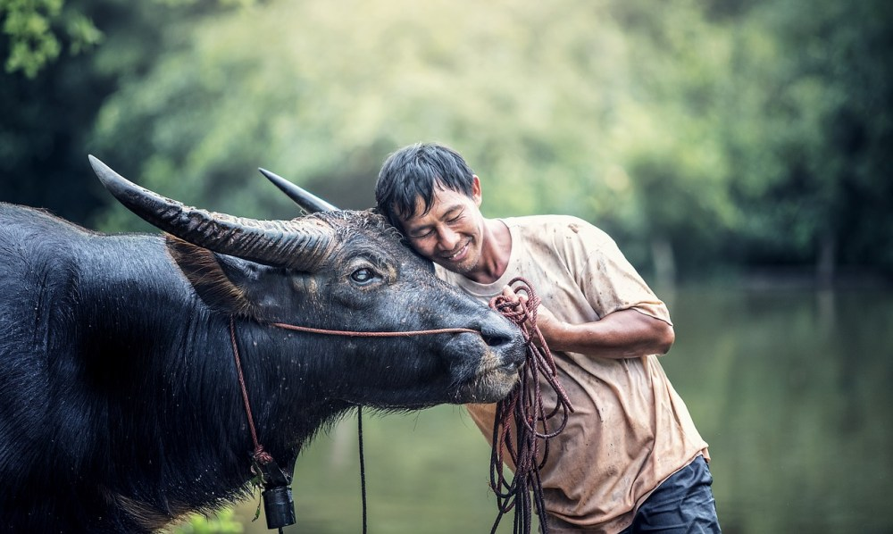 animals asia buffalo 1782431 - How to Make the Best Decisions: The Archer's Perspective: