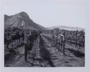 B&W Mountain Vineyard