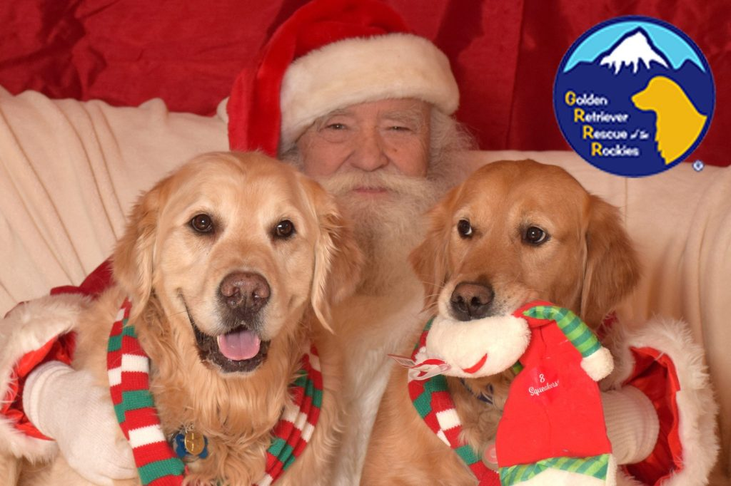Golden Retriever Rescue of the Rockies (GRRR) is one of the largest rescues in the country with a 5-acre facility and live-in caregiver.