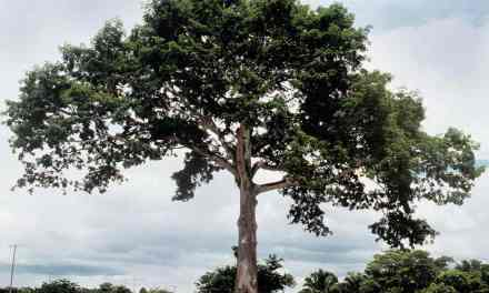 Pensar en Soluciones: Analogía del Árbol
