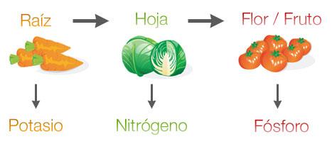 Infografía de Rotación de cultivos