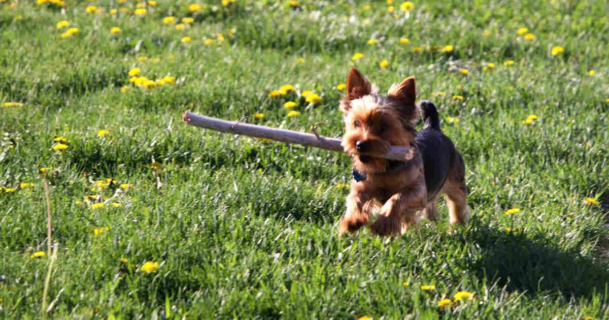 cane con bastone in bocca